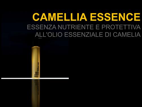 olio di camelia